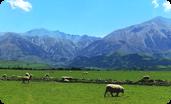 ニュージーランドの牧草地