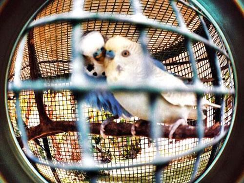 バンタヤンの鳥たち