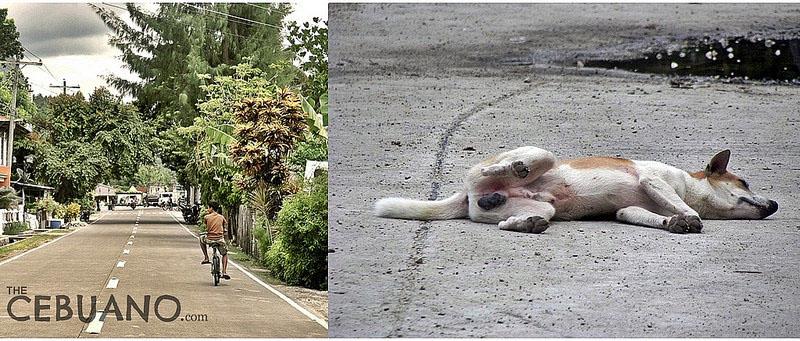 セブの道路と犬