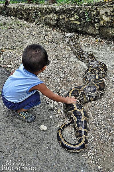 セブ動物園のヘビ