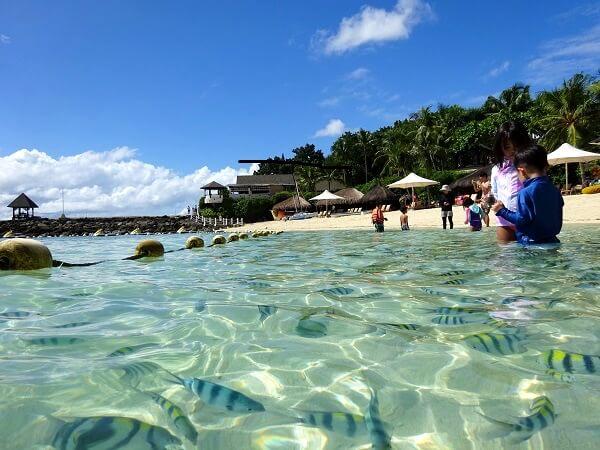 セブ島シャングリラのプール